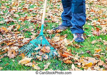 rassembler, feuilles, herbe, parc, homme
