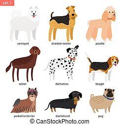 rassen, hund, karikatur, ikone