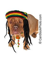 Rasta Doggy - Funny View on a Big Doggy in Rastafarian Hat