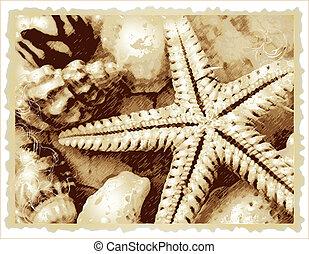 raster, estrellas de mar, bich, cockshell