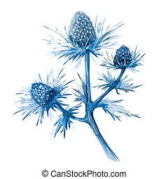raster, flores, acuarela, feverweed