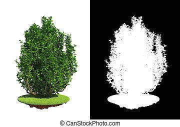 raster, mask., zielony, krzew, szczegół