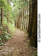 rastro, açores, floresta, portugal