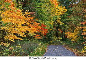 rastro, em, a, floresta outono