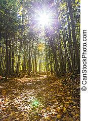 rastro, em, floresta outono, paisagem
