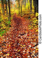rastro, em, outono, floresta
