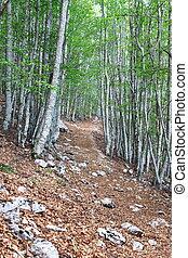 rastro, floresta