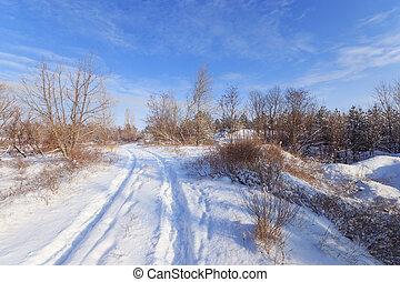 rastro, floresta, inverno, nevado