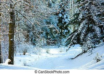 rastro, inverno, floresta
