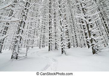 rastro, madeiras