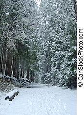 rastro, madeiras, nevado
