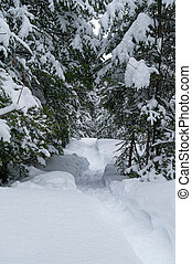 rastro, madeiras, snowshoe