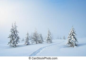rastro, neve