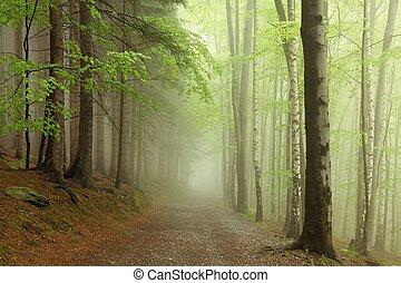 rastro, nevoeiro, floresta