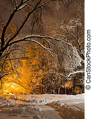 rastro, noite, parque, inverno, nevado