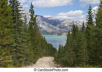 rastro, primero, a, un, lago montaña, -, alberta, canadá