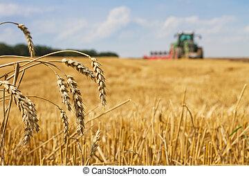 rastrojo, último, después, campo, pajas, cosecha, arada,...