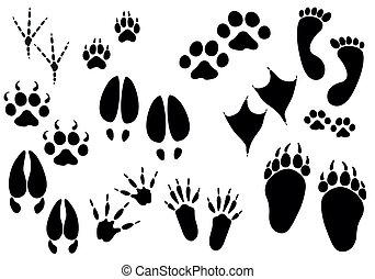 rastros, vetorial, -, animal