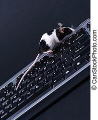 ratón, keybord