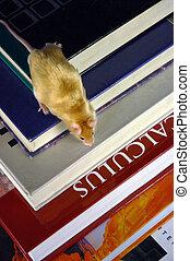 ratón, sobre