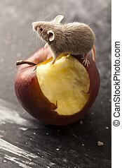 ratón, y, manzana, rural, vívido, colorido, tema