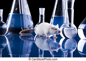 Rat and glass - A laboratory is a place where scientific...
