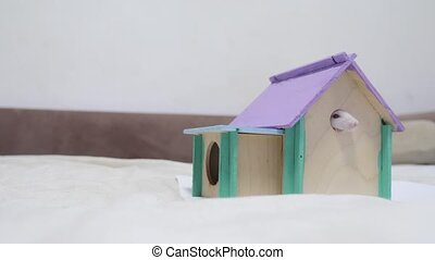 rat coming out of wooden house sniffing nose a hole cute video out of the burrow of a house and sniffs food in search of food . cute mouse albino rat pet goes to the house. white rat concept lifestyle cute