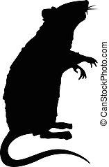 rat, debout, silhouette