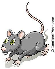 rat, gris