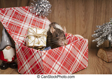 Rat is a symbol of the new year. Gray rat looks at gift boxes. Funny little rat in a gift box. Symbol of the year 2020.