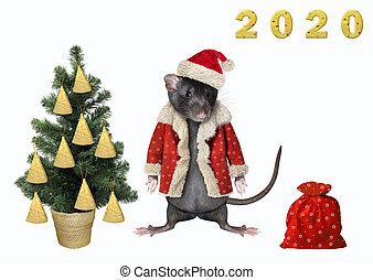 Rat near the Christmas tree 2