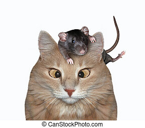 Rat on cat head