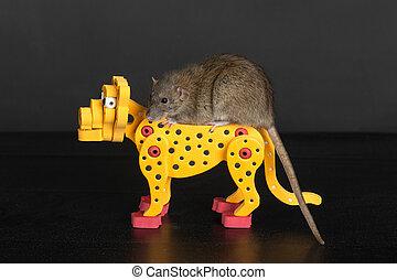 rat on toy leopard