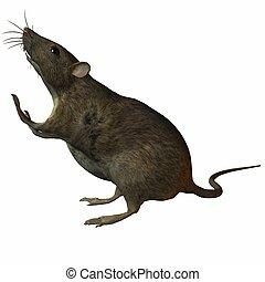Rat - 3D Render