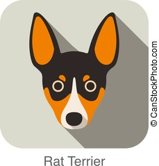 Rat terrier dog face flat icon, dog series