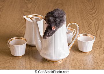 rat with a tea set