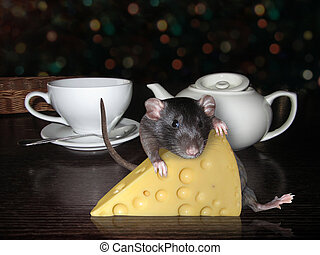 Rat with cheese on the table
