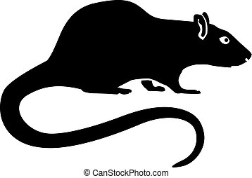 Rat with long tail