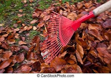 ratisser, fall., jardinage, leaves., enlever