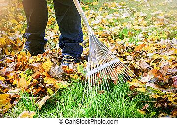 ratisser, jardin, feuilles, automne, jardinier