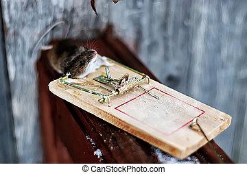 rato, ratoeira
