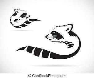 raton laveur, image, vecteur, fond blanc