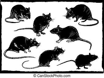 rats collection, freehand sketching, vector illustration -...