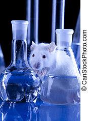 ratte, laboratory!