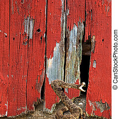 Attacking rattle snake by old red barn.