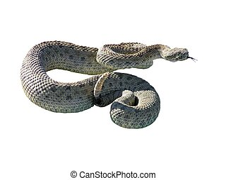 Rattle Snake - A rattle snake getting ready to strike. Looks...