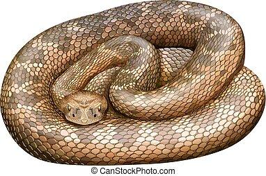Rattlesnake - Illustration of a close up rattle snake