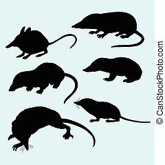 ratto, silhouette