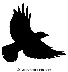 Silhouette of a flying black raven. Vector black white illustration