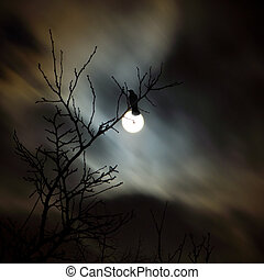 Raven siting on the branch and fullmoon night